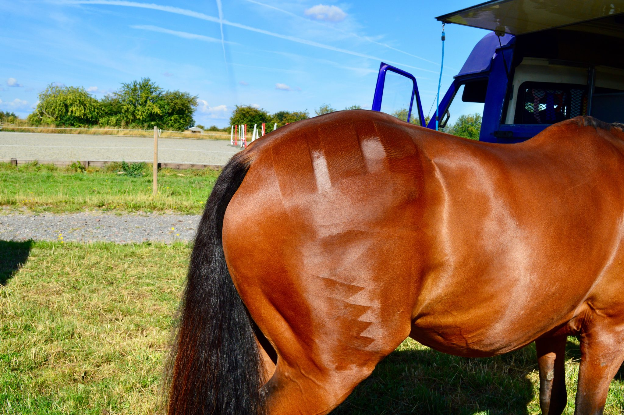 Let's talk about: Horse feed and why I keep things simple! post thumbnail image